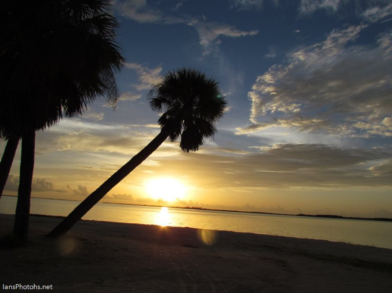 Sunset and a palm tree on the Sanibel causesway