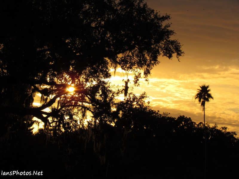 Orange sunset photo through an oak tree with a palm tree, LaBelle, Florida
