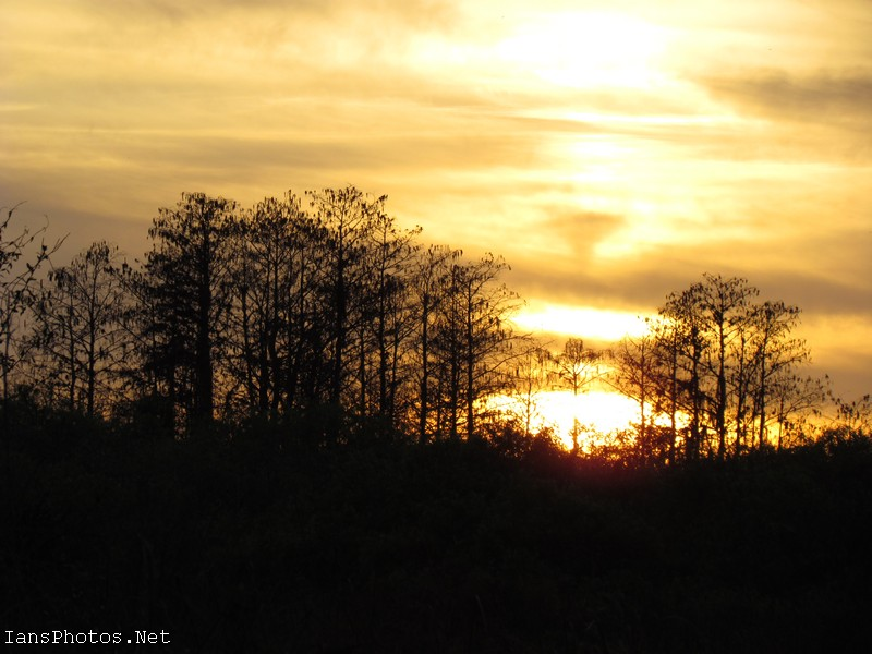 Sunset Through Cypress Trees Okaloacoochee Slough State Forest Florida. Wall Art by Ian Sands